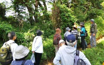 第1回野草を楽しむ会を開催しました!5月8日(日)