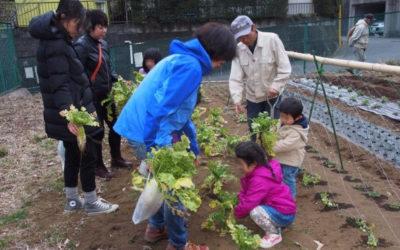 1丁目菜園で幼児が「大根引き抜き」体験しました。