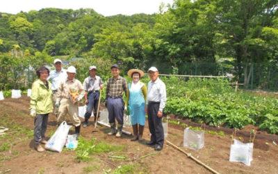 春の菜園・植付けと手入れが実り5月にはマルシェ向けの初収穫に漕ぎ着けました!