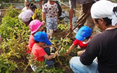 NPO菜園クラブサポーター家族が玉ねぎ・ジャガイモ、その他収穫・植え付けイベントの体験をしました