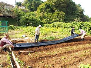 緑の保全活動:菜園外周の蔓除去、大樹の枝払いで来春に備える!(6月⇒11月の変容)