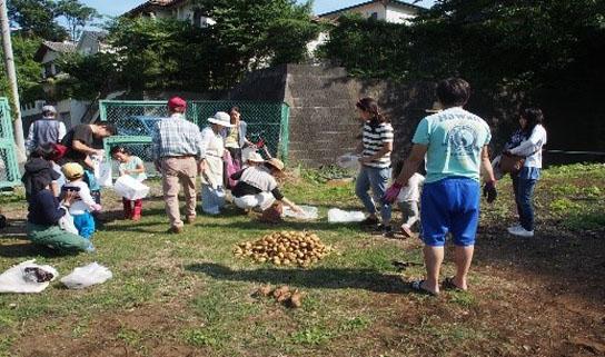 6月17日(日)親子ジャガイモ掘り体験実施