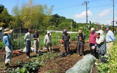 春の菜園作業を楽しむ!(H31,3月~R1, 5月)