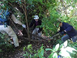 台風15号の傷跡整備とゴミ回収:裏鎌倉宮道
