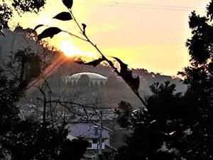 12月の散在ガ公園飛地の緑の保全見守り:野草とナラ枯れ